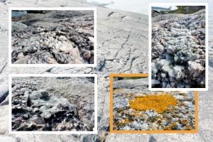 granit et lichens