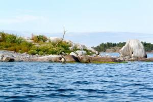 île aux bernache