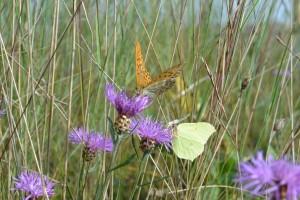 île aux papillons